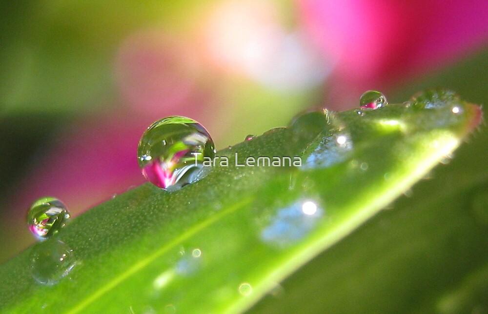 Through The Looking Glass by Tara Lemana