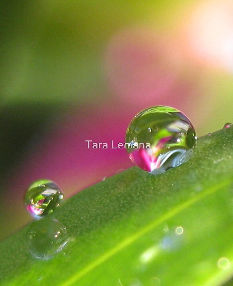 Through The Looking Glass Again by Tara Lemana