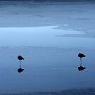 Morning Flamingos by Ryan Bird