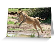 lioness leap Greeting Card