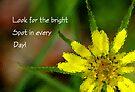 A Little Sunshine by Vicki Pelham