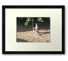 Roos Framed Print