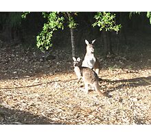 Roos Photographic Print