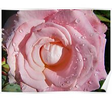 Raindrops on a pink rose Poster