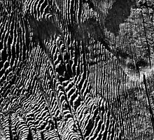 """General Noble Tree - """"Chicago Stump"""" Detail 5 by Alex Preiss"""