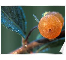 Orange Dewy Berries Poster