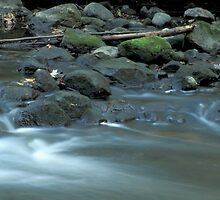Water, Stones & Moss by Bill Spengler