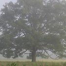 The Tree by Sherri Hamilton