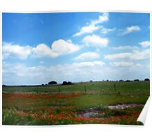 Orange Field Of Flowers Poster