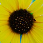 The Bright SUN Flower by Roschetzky