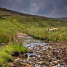 Mossdale Beck by Andrew Leighton