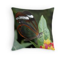 GlassWing Butterfly, Throw Pillow