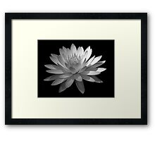 Ebony And Ivory ~ Part Four Framed Print