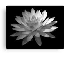 Ebony And Ivory ~ Part Four Canvas Print