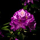 Rhododendron Portrait #2 by G. Patrick Colvin