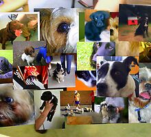 Special Dogs Collage by Songwriter