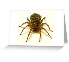 Wolf Spider with hatchlings Greeting Card