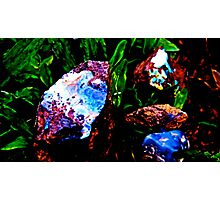 Opal In raw form  Photographic Print