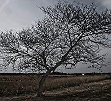 Tree Along Marsh by Jason Lee Jodoin