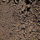 Mud by Bluesrose