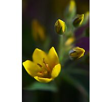Yellow parade (from wild flowers collection) Photographic Print