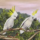 Sulphur Crested Cockatoo by Walter Colvin