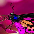 pinky mauvy butterfly by kellimays