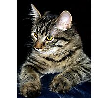 It's Tabby Time !! Photographic Print