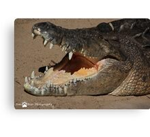 Crocodile Canvas Print