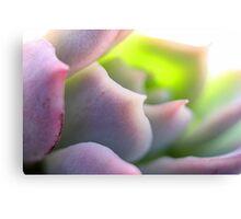 Soft Mauve Canvas Print