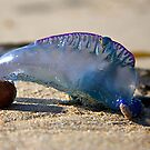 Blue Bottle Jelly by Paul Moore