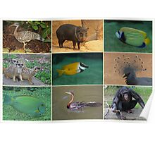 Burgers Zoo Poster
