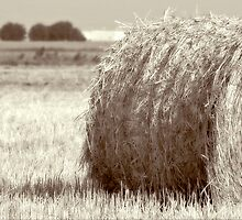 Hay Per Bale by Trish Mistric