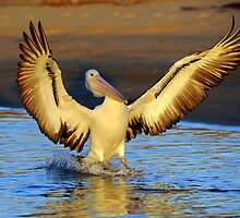 """ Wings Ahoy "" Marlo Vic. by helmutk"