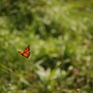 If a Butterfly Flaps Its Wings by will032890