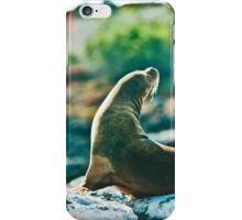 Galapagos Seal chilling on the rocks iPhone Case/Skin