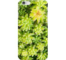 Crassula Leaves iPhone Case/Skin