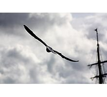 Bird In Flight by Ancient Ship  Photographic Print