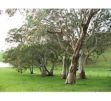 Treesville Photographic Print