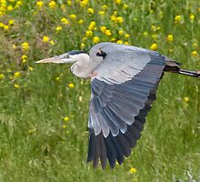 Heron and Flowers by Leroy Laverman