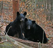 Mama Bear And Cub by marilynwood