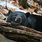 Mama Bear Relaxed by marilynwood