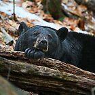 Mama Bear Relaxed by marilynwood