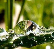 big drop of water on the grass by tego53
