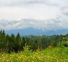 Summer in Carpathian Mountains  by Karl Smutko