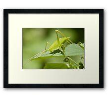 Green Hopper Framed Print
