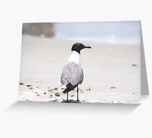 Observe The Surroundings Greeting Card