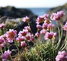 Sea Pinks by manda
