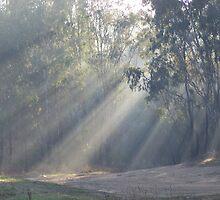I see The Light by Luke Commisso