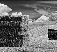 Harvest time by Lea Valley Photographic